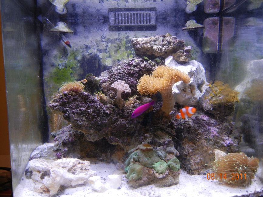 Click image for larger version  Name:Fish Tank.jpg Views:217 Size:255.3 KB ID:51823
