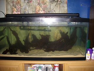Click image for larger version  Name:aquascape 004.jpg Views:132 Size:242.1 KB ID:51829