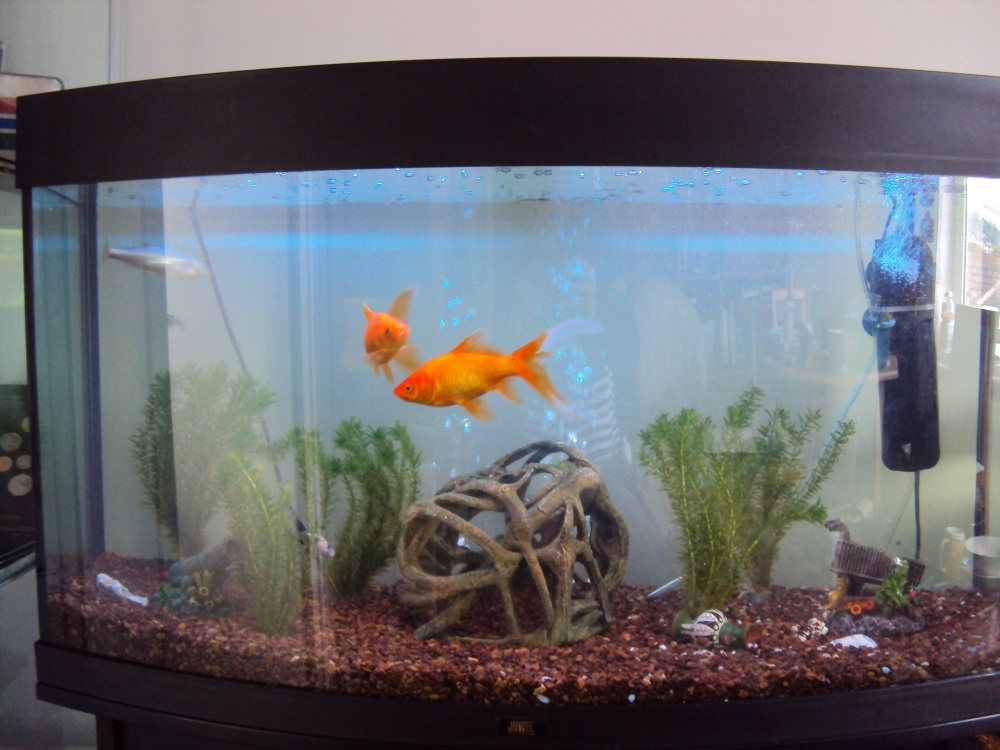 Click image for larger version  Name:180 litre tank.jpg Views:75 Size:208.7 KB ID:52763