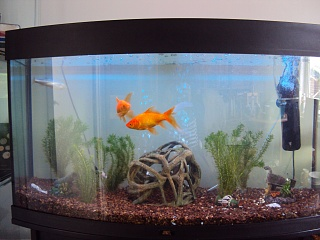 Click image for larger version  Name:180 litre tank.jpg Views:82 Size:208.7 KB ID:52763