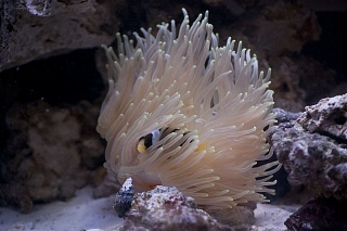 Click image for larger version  Name:anemone.jpg Views:87 Size:179.1 KB ID:53364