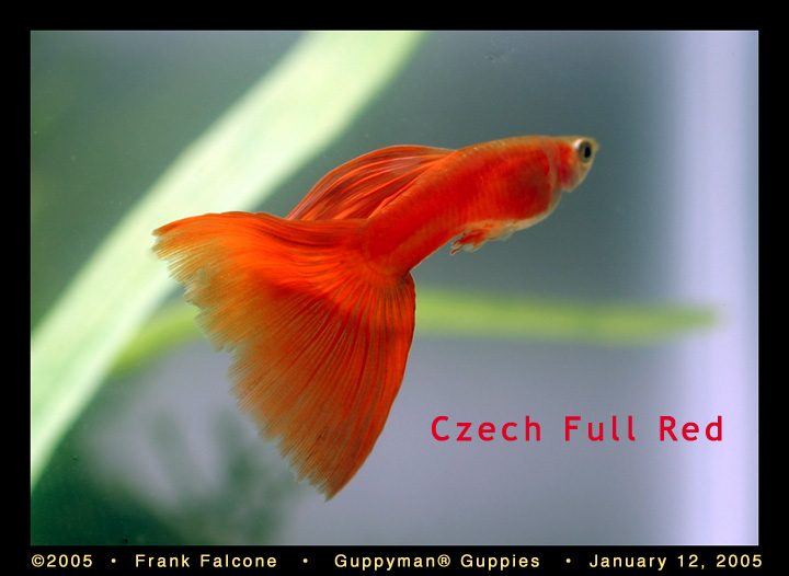 Click image for larger version  Name:cz_red_1_aa.jpg Views:81 Size:90.2 KB ID:54