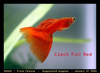 Click image for larger version  Name:cz_red_1_aa.jpg Views:139 Size:90.2 KB ID:54