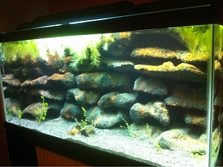 Ph Gh Kh And Lake Tanganyika Cichlids Aquarium Advice