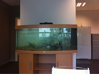 New Juwel Vision Planted Tank Aquarium Advice Aquarium