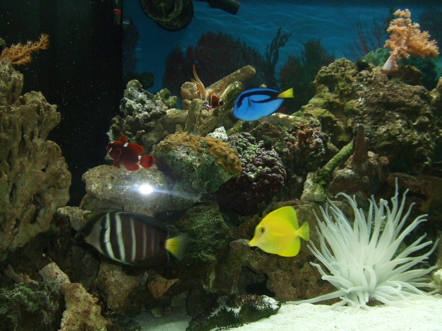Click image for larger version  Name:Fish 004.jpg Views:136 Size:254.6 KB ID:54826