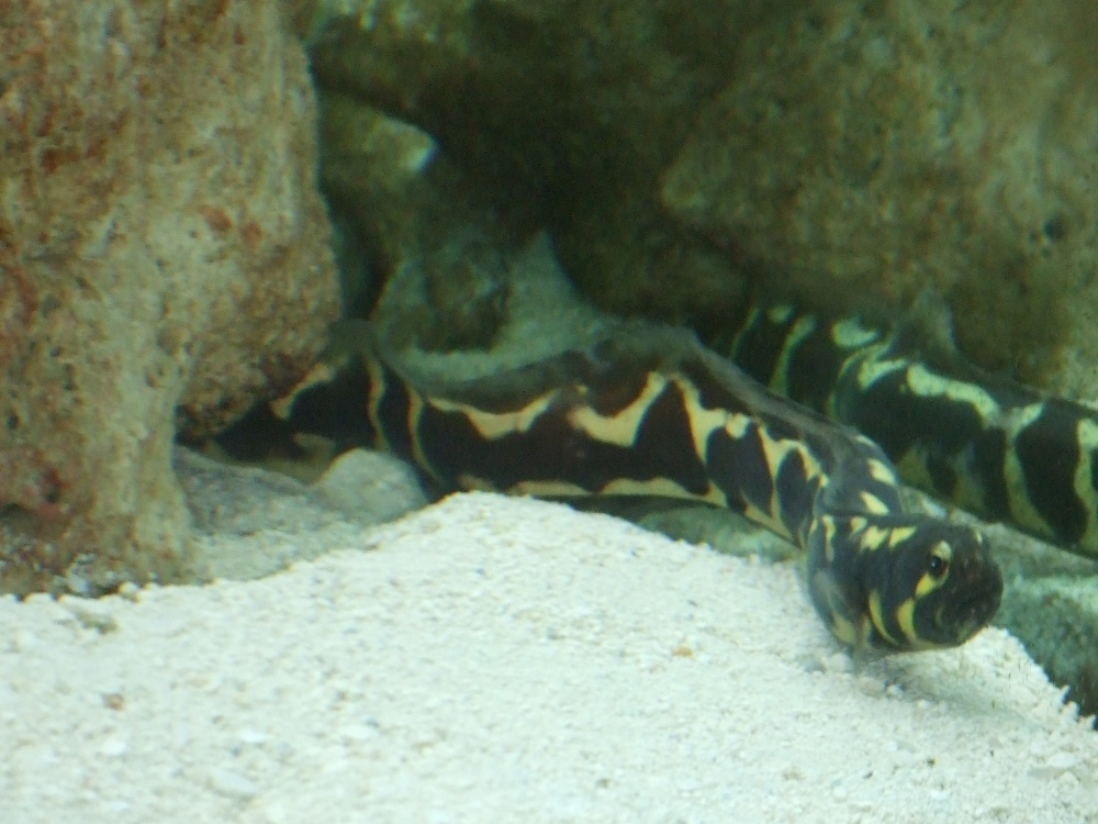 Click image for larger version  Name:Fish 002.jpg Views:147 Size:215.5 KB ID:54827
