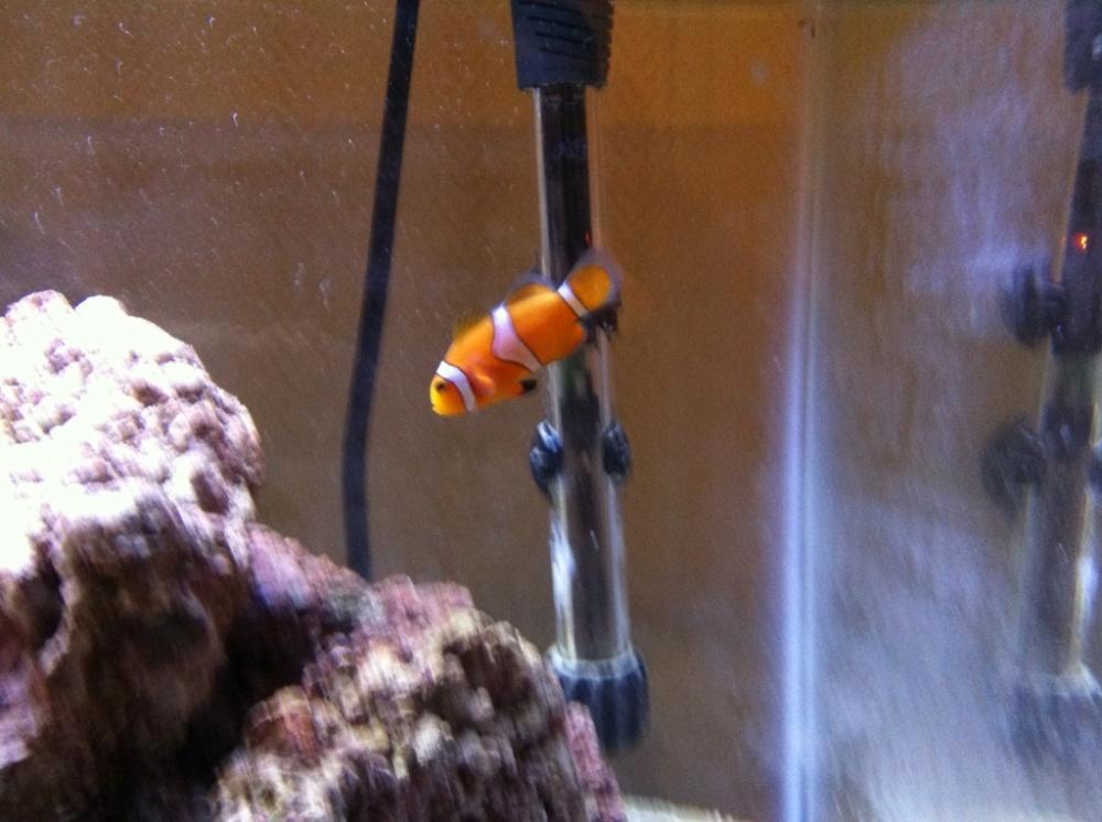 Click image for larger version  Name:clown orange.jpg Views:76 Size:216.1 KB ID:57455