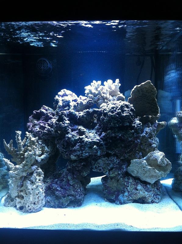 Click image for larger version  Name:aquarium.jpg Views:358 Size:212.7 KB ID:58982