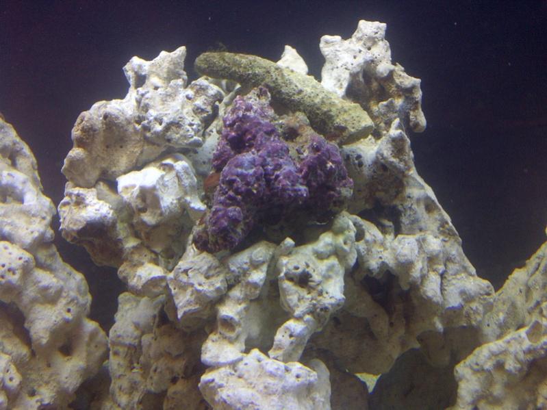 Click image for larger version  Name:Original Coraline Specimen 00282.jpg Views:51 Size:187.8 KB ID:60452