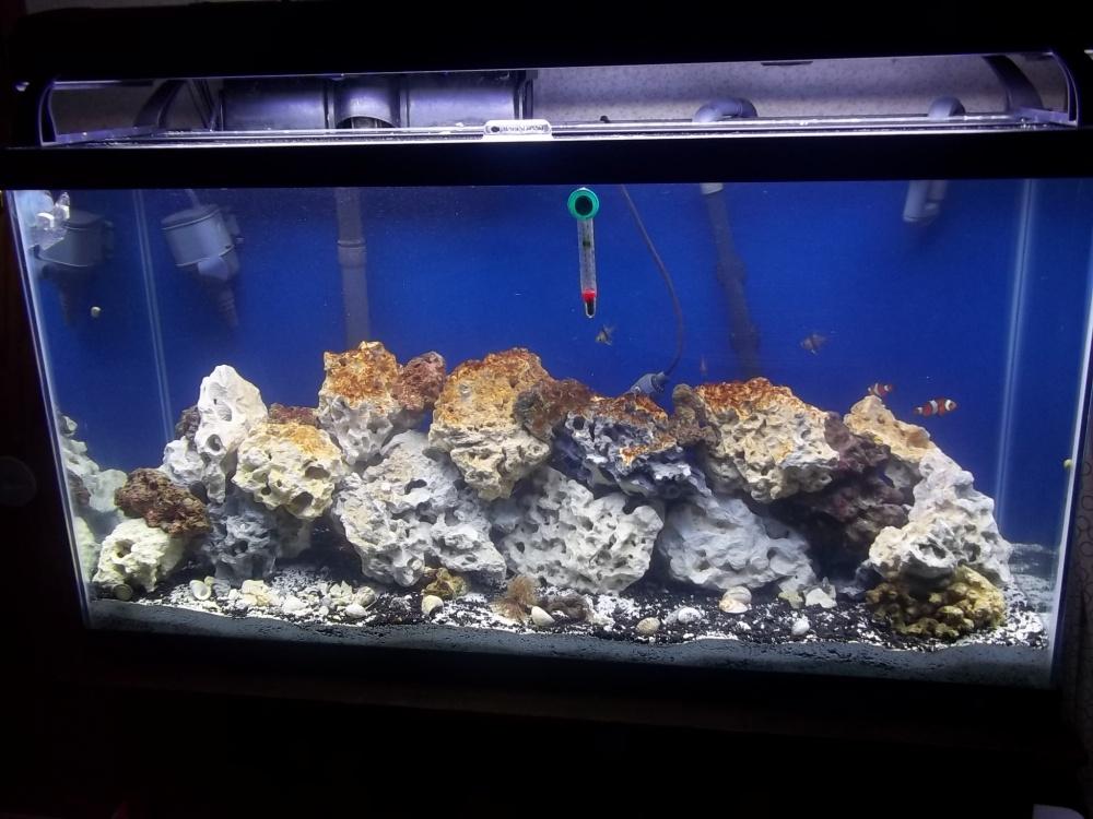 Click image for larger version  Name:brown algae.jpg Views:60 Size:215.9 KB ID:61036