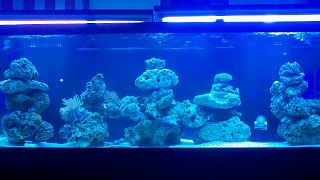 Click image for larger version  Name:125 Gallon.jpg Views:164 Size:93.5 KB ID:62453