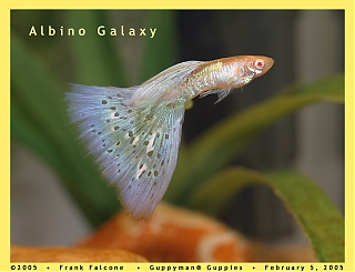Click image for larger version  Name:albino_galaxy_1i_aa.jpg Views:99 Size:92.6 KB ID:629