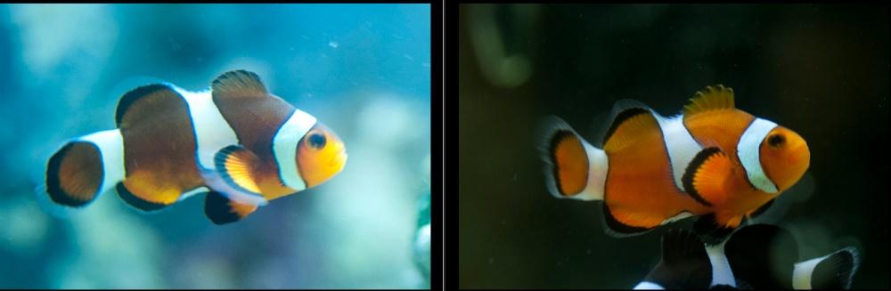 Click image for larger version  Name:Screen shot 2011-11-29 at 4.33.31 PM.jpg Views:95 Size:79.2 KB ID:63507