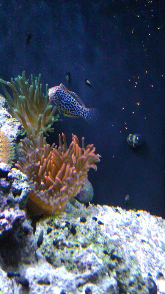 Click image for larger version  Name:wrasse.jpg Views:89 Size:250.5 KB ID:63694