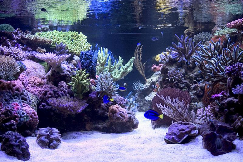 Click image for larger version  Name:lrg-628-reef_tank.jpg Views:112 Size:109.4 KB ID:63924