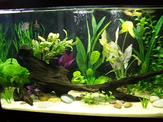 Click image for larger version  Name:newest tank 004.jpg Views:169 Size:254.7 KB ID:65107