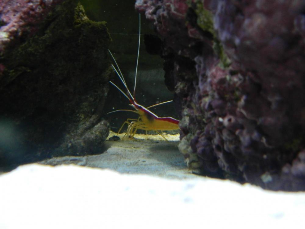 Click image for larger version  Name:Shrimp.jpg Views:149 Size:136.3 KB ID:66469