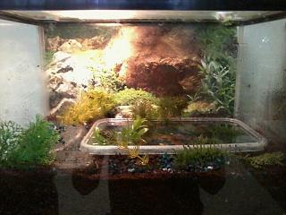 Semi aquatic or semi terrestrial??? - Aquarium Advice - Aquarium Forum ...