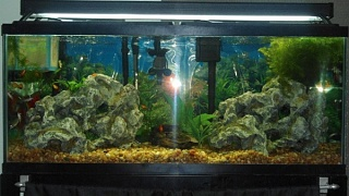 Click image for larger version  Name:55 gallon.jpg Views:100 Size:91.7 KB ID:68722
