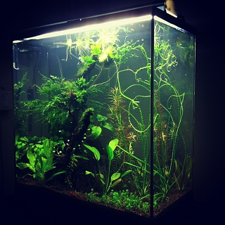 30 Gallon Long Aquarium 1000 Aquarium Ideas