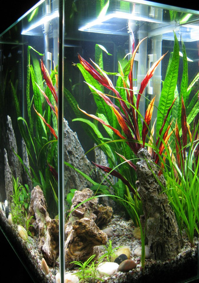Click image for larger version  Name:tank cycled and planted.jpg Views:35 Size:179.0 KB ID:71485