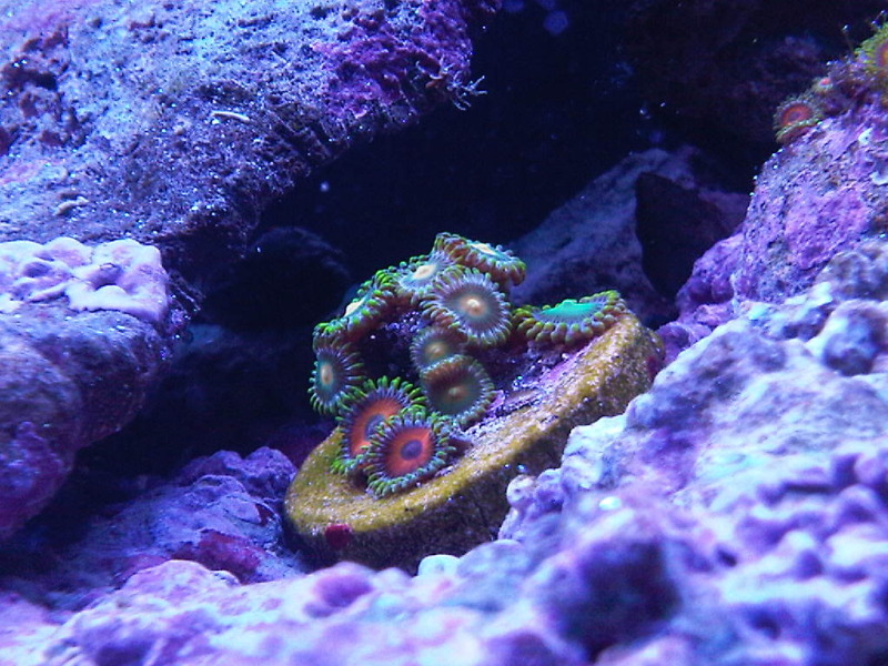 Click image for larger version  Name:zoas.jpg Views:49 Size:180.4 KB ID:73343