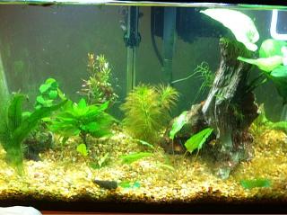 Rescape 10 Gallon Aquarium Advice Aquarium Forum Community