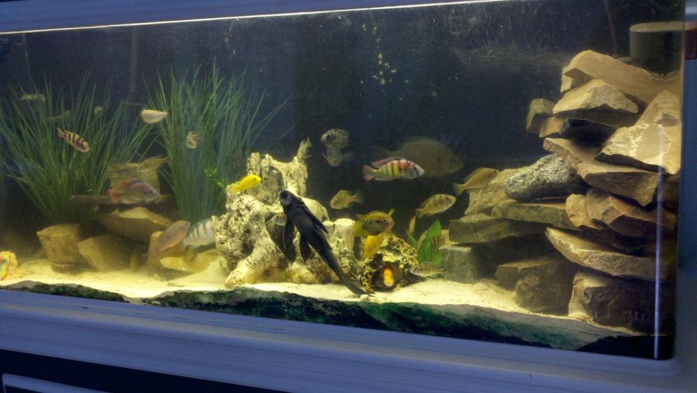 Click image for larger version  Name:Fish tank.jpg Views:53 Size:196.4 KB ID:75343