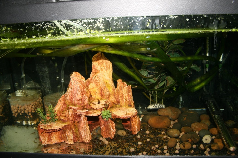 Click image for larger version  Name:shrimp heaven (Large).jpg Views:123 Size:254.5 KB ID:76112