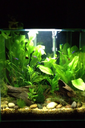 Click image for larger version  Name:Fluval Edge.jpg Views:186 Size:51.1 KB ID:76759