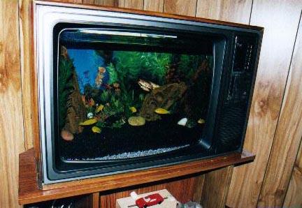 Click image for larger version  Name:tv_aquarium2.jpeg Views:76 Size:41.4 KB ID:77197