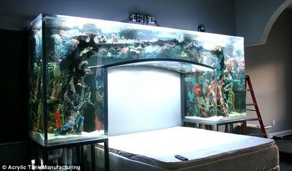 Click image for larger version  Name:chad-ochocinco-aquarium-bed-595x348.jpeg Views:49 Size:53.9 KB ID:77552