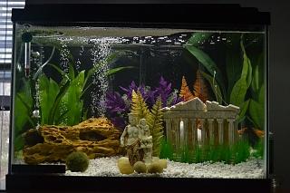 My greek 20 gallon aquarium advice aquarium forum for 20 gallon fish tank decoration ideas