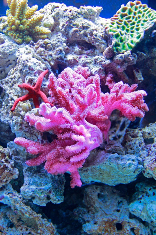 Click image for larger version  Name:coral1.jpg Views:83 Size:249.1 KB ID:85271
