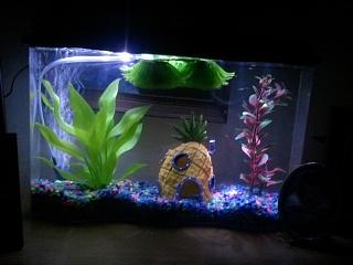 Guppy Fry Growth Chart Aquarium Advice Forum Community