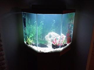 44 gallon pentagon up and running aquarium advice for Pentagon fish tank