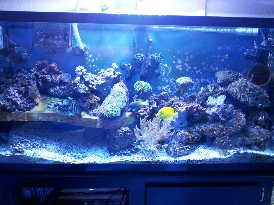 Click image for larger version  Name:60gallon tank.jpg Views:213 Size:161.0 KB ID:89172