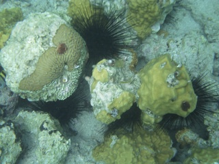 Click image for larger version  Name:urchins.jpg Views:58 Size:164.4 KB ID:90666