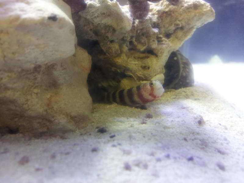 Click image for larger version  Name:Goby.jpg Views:91 Size:221.5 KB ID:92048