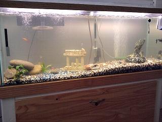 freshwater crabs? - Aquarium Advice - Aquarium Forum Community