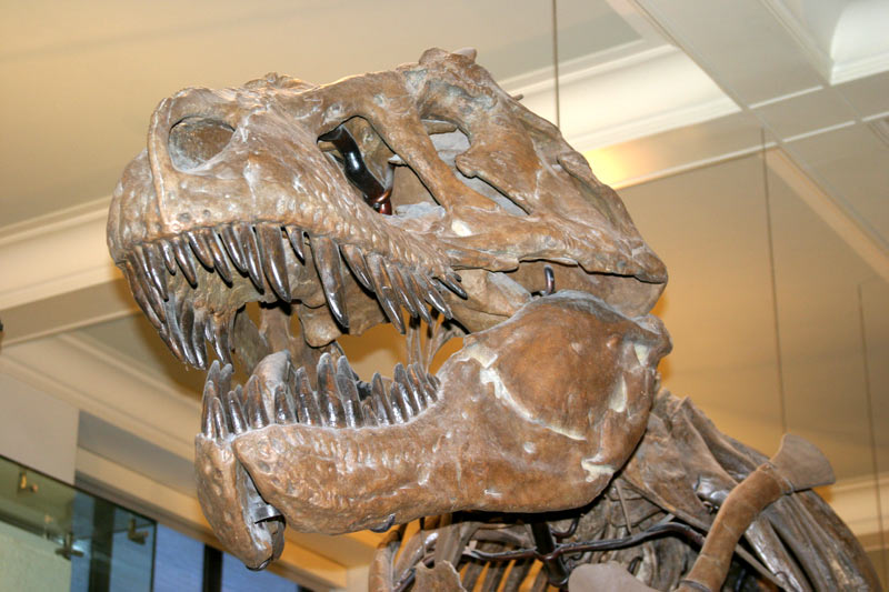 Click image for larger version  Name:trex1.jpg Views:72 Size:85.4 KB ID:967