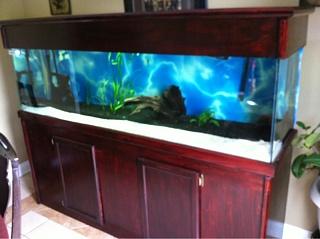For sale 125 gallon aquarium advice aquarium forum for 125 gallon fish tank
