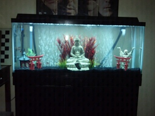Stocking for a 55 gallon tank aquarium advice aquarium for 10 gallon fish tank stocking ideas