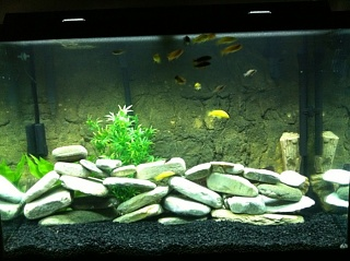 My 65 gallon Mbuna tank - Aquarium Advice - Aquarium Forum