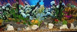 55g african ciclids  2 x penguin 350s  led with lunar lights  tufa and lace rock  coral decorations  anubias and fern plants