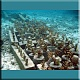 Florida Reef Aquarium Group