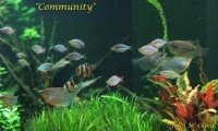 People of the interest in Easily Breeding Mollies , and taking the challenge of Breeding other community fish . Example Blue Gouramis , Angel Fish , Colorful Endlers and other popular...