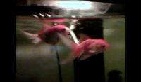 This is for goldfish owners only... You are welcome  to join if you are think about being a goldfish owner or just new to the hobby of having a goldfish. Remember my saying is, the...