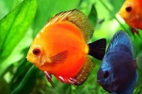 A group where we talk about schooling fish (group fish)